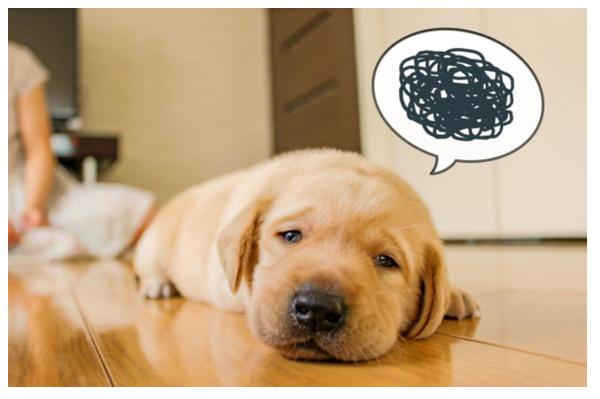 ストレス犬