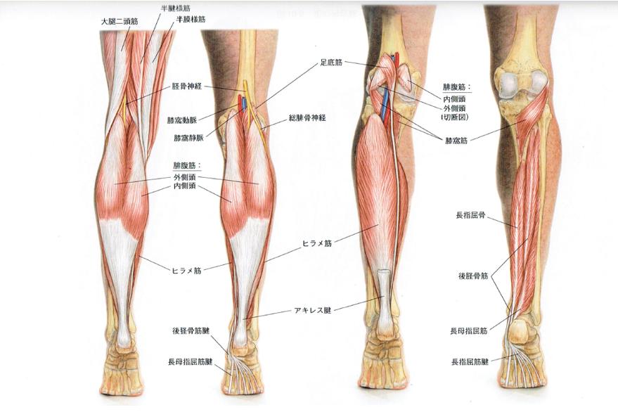 坐骨神経痛でふくらはぎの痛みしびれ - 福岡薬院の整体院 痛み ...